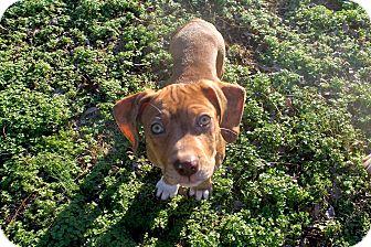 Mixed Breed (Medium) Mix Puppy for adoption in FOSTER, Rhode Island - Disney
