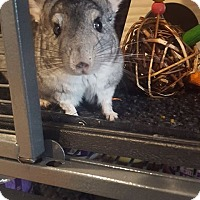 Adopt A Pet :: Nugget - Patchogue, NY