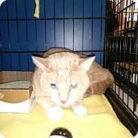 Adopt A Pet :: Kosmos - Avon, OH
