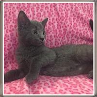 Adopt A Pet :: Wilbur - Mt. Prospect, IL