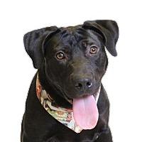 Adopt A Pet :: Orion - Chico, CA