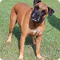 Adopt A Pet :: Brandi (80 lb) Awesome Girl - Niagara Falls, NY
