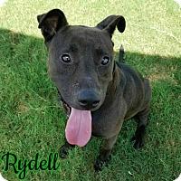 Adopt A Pet :: Rydell - Garber, OK