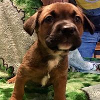 Adopt A Pet :: Floyd - chicago, IL