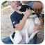Photo 1 - American Bulldog Mix Dog for adoption in Kingwood, Texas - Oscar