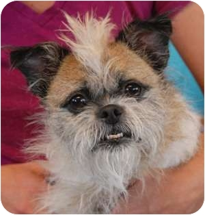Pug/Terrier (Unknown Type, Small) Mix Dog for adoption in Las Vegas, Nevada - Frisbee