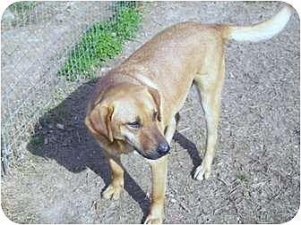 Chow Chow Mix Dog for adoption in Hayden, Alabama - Eddie