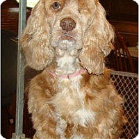 Adopt A Pet :: Pearl - Sugarland, TX