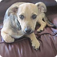 Adopt A Pet :: Logan Adoption Pending - N. Fort Myers, FL