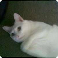 Adopt A Pet :: Molly - lake elsinore, CA
