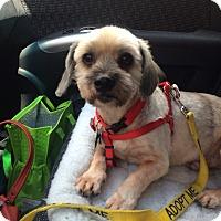 Adopt A Pet :: Willie Nelson - Austin, TX