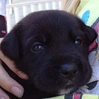 Adopt A Pet :: Maggie - Long Beach, CA