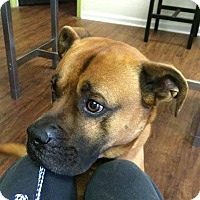Adopt A Pet :: Buster - Indian Trail, NC