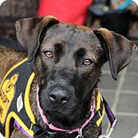Adopt A Pet :: Aurora - Richmond, VA