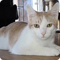 Adopt A Pet :: Rhett - Garland, TX