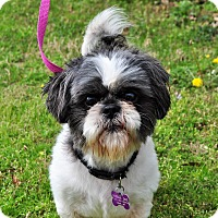 Adopt A Pet :: * Hey, Louie! - PENDING - Westport, CT
