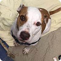 Adopt A Pet :: Jade - Jupiter, FL