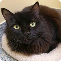 Adopt A Pet :: Aggie and Hercule - bonded pair - Verona, WI