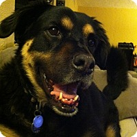 Retriever (Unknown Type) Mix Dog for adoption in Vail, Arizona - Lexi