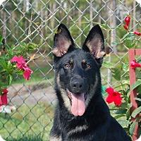 Adopt A Pet :: Kona - Ormond Beach, FL