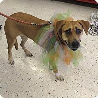 Adopt A Pet :: Rain (Courtesy Listing) - Scottsdale, AZ