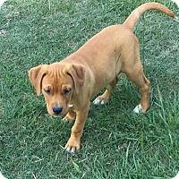 Adopt A Pet :: Renegade - Blountstown, FL