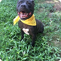 Adopt A Pet :: Ruger - Columbia, TN