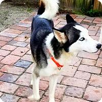 Adopt A Pet :: Brad - Clearwater, FL