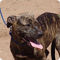 Adopt A Pet :: Zuma - Joshua, TX