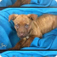 Adopt A Pet :: Jori - Greensboro, GA