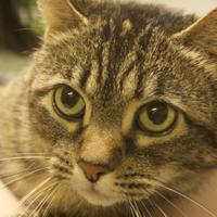 Adopt A Pet :: Sprinkles - Potsdam, NY