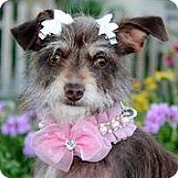 Adopt A Pet :: Baby Bella - Oakley, CA