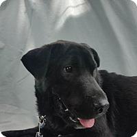 Adopt A Pet :: Rhone - Burleson, TX