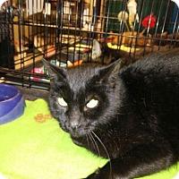 Adopt A Pet :: Percy aka Shiloh - Avon, OH