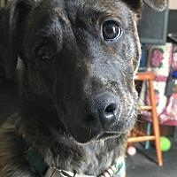 Adopt A Pet :: WYATT - Minnetonka, MN