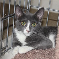 Adopt A Pet :: Loretta Lynn - Flower Mound, TX