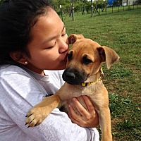 Adopt A Pet :: Salina - Greeneville, TN