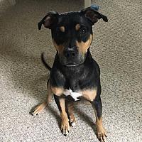 Adopt A Pet :: Luke - Summer Shade, KY