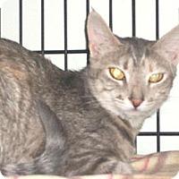 Adopt A Pet :: Darla - Watsontown, PA