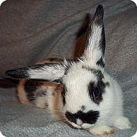 Adopt A Pet :: Sully - Santee, CA