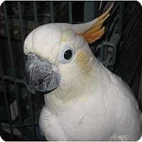 Adopt A Pet :: Sammy - Melbourne Beach, FL