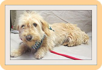 Terrier (Unknown Type, Medium) Mix Dog for adoption in Woodlyn, Pennsylvania - Miny