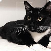 Adopt A Pet :: Leah Remini - Richboro, PA