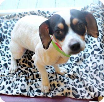Beagle Mix Dog for adoption in Atlanta, Georgia - Stacey