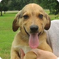 Adopt A Pet :: Jackson - Salem, NH