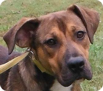 Shepherd (Unknown Type)/Retriever (Unknown Type) Mix Dog for adoption in Cedartown, Georgia - 29933302