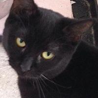 Adopt A Pet :: Nagoya - Port Clinton, OH