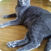 Adopt A Pet :: Cosima - Oakland, CA