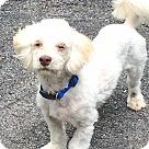 Adopt A Pet :: Boz-Rags