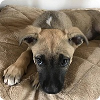 Adopt A Pet :: Emory - West Hartford, CT